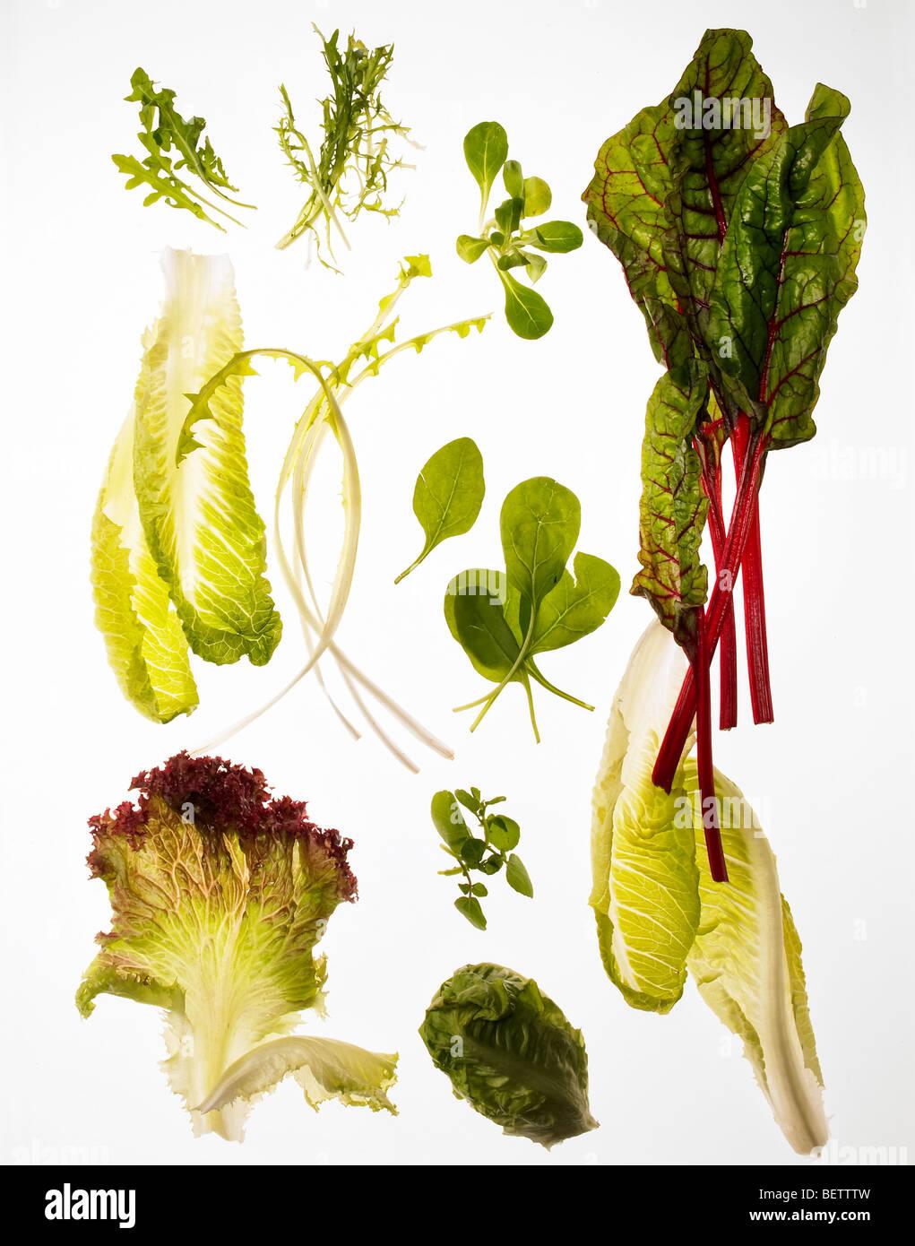 Salada ingredientes, diferentes folhas verdes adequados para saladas. Imagens de Stock