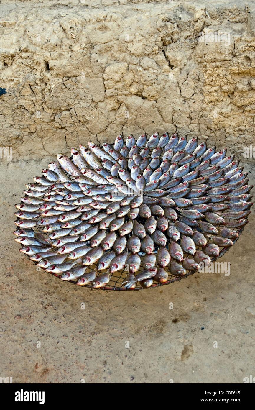 Peixes à venda na rua; Mopti, Mali, África Ocidental Imagens de Stock