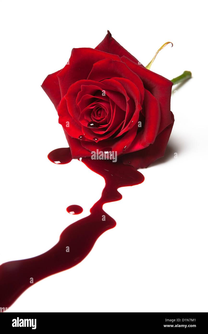 Rosa vermelha com o sangue que flui para fora do seu coração Imagens de Stock