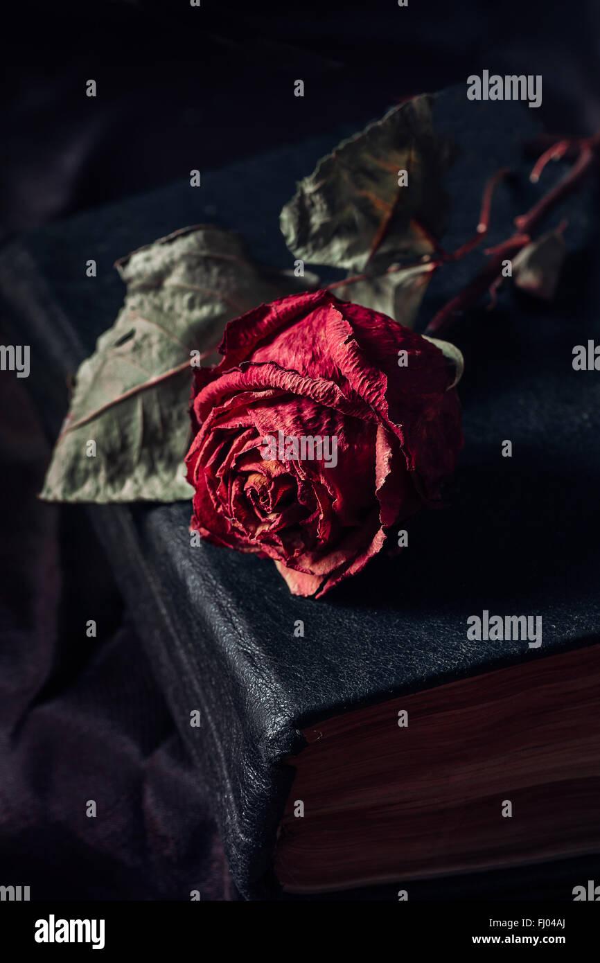 Uma rosa seca Imagens de Stock