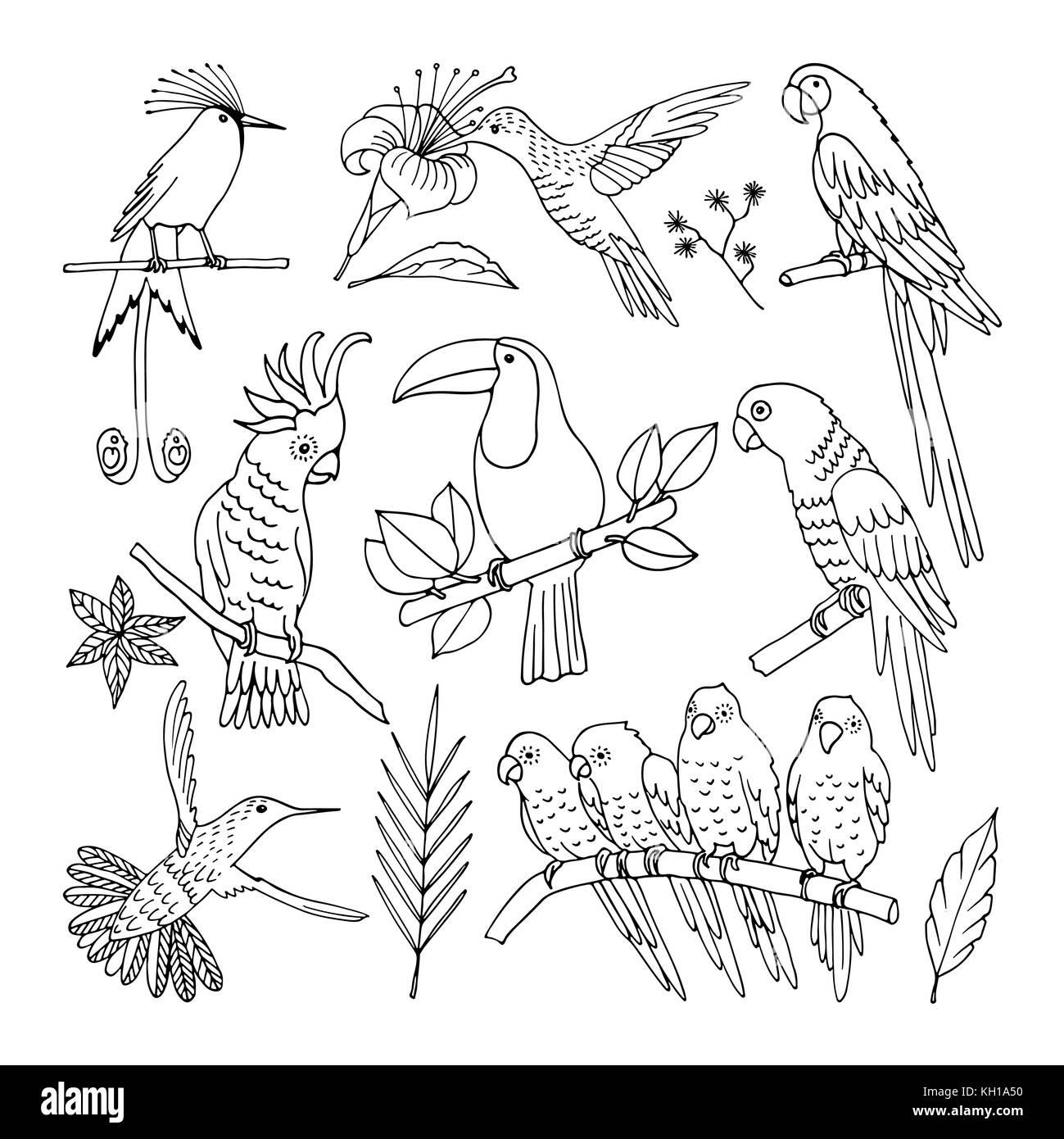 um realista contorno desenhado à mão coleção de belos pássaros