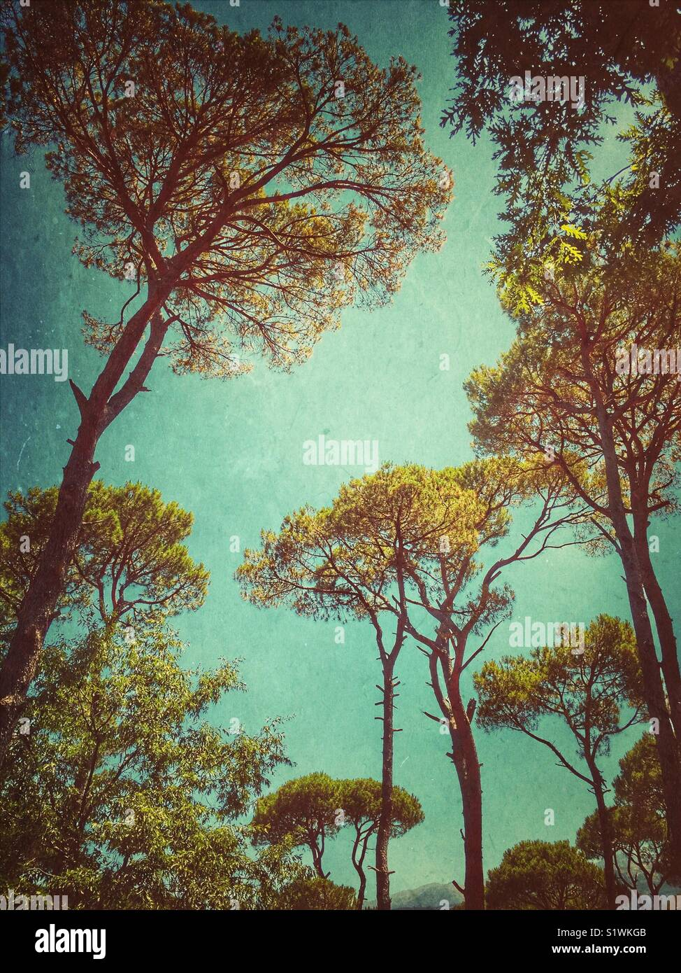 Jizzine floresta no Líbano Imagens de Stock