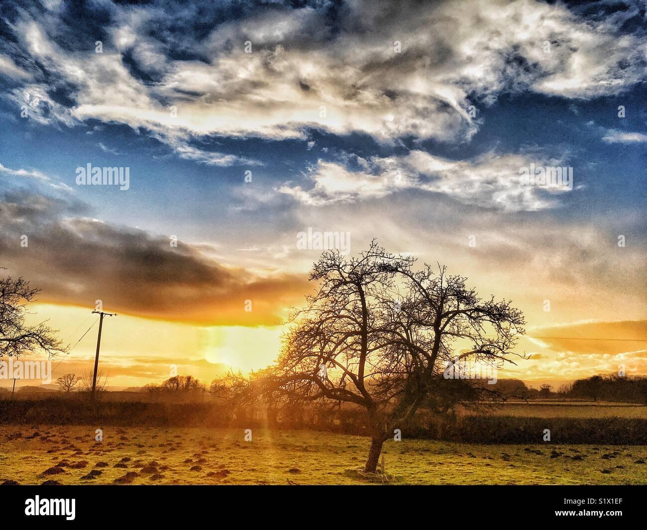 Sol de inverno Imagens de Stock