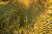 common-garden-spider-and-web-uk-DEPMJ8.j