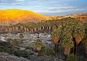 sunset-over-the-thousand-palms-oasis-in-