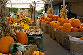 pumpkins-and-squash-for-sale-at-the-jean