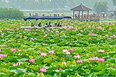 shijiazhuang-anxin-county-1st-apr-2017-f