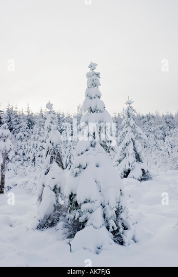 Winter tree in the forest - Stock Image
