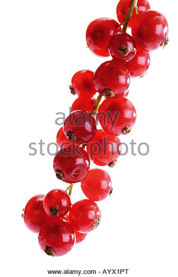 Communication on this topic: Fresh Summer Berry Tart with Red Currant , fresh-summer-berry-tart-with-red-currant/
