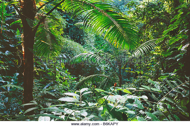 vegetation in the tropical rainforest Vegetation: plant life, usually in a certain area when you think of the tropical rainforest, you may think of a towering forest dripping wet and full of life.