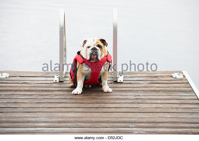 Dog sitting on wooden pier in lake - Stock Image