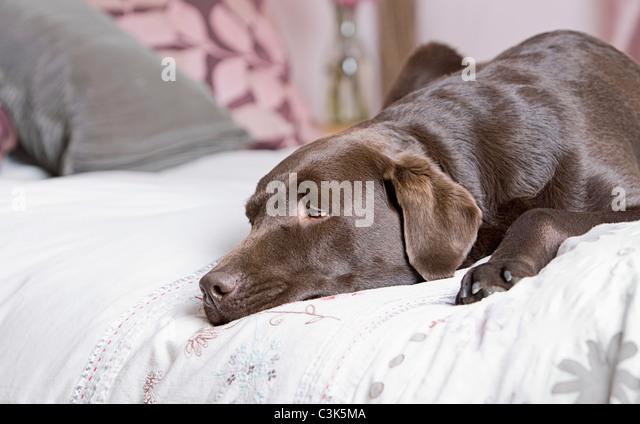 цены собака не переносит одиночество что делать доставка при
