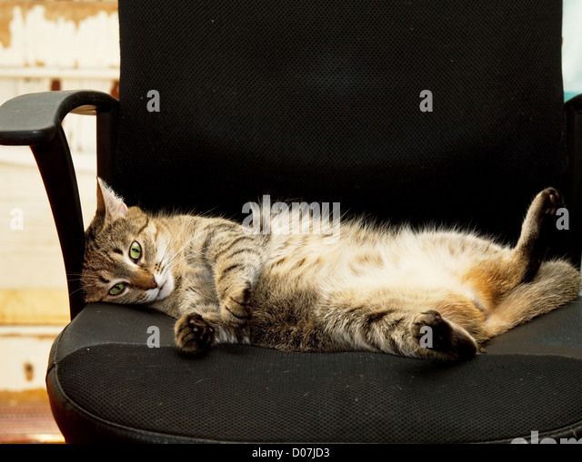 relaxing-cat-d07jd3.jpg