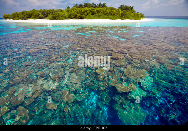Coral plates, lagoon and tropical island, Maldives, Indian Ocean, Asia - Stock Image