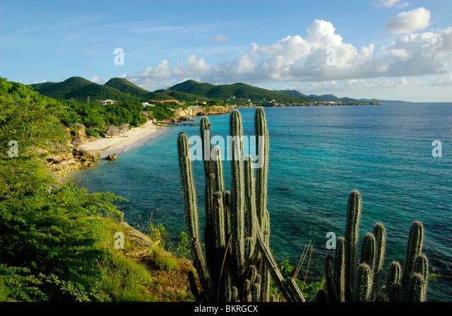 cactus-above-playa-kalki-viewed-from-lod