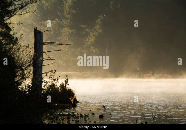 misty-morning-forest-wood-lake-sunlight-