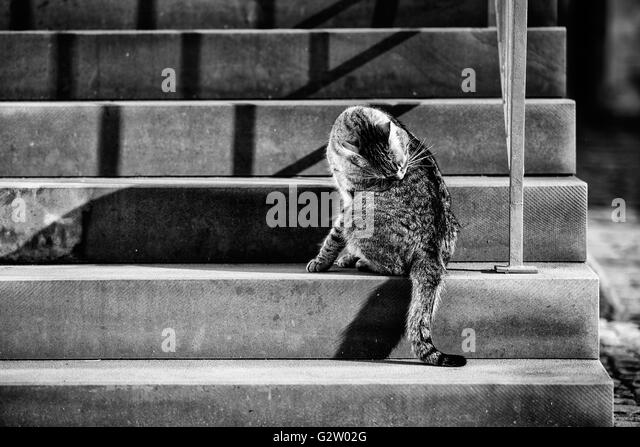 animal-portrait-of-a-house-cat-walking-t