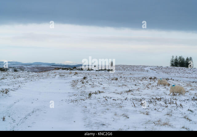Hergest ridge  Kington with the Wheatstone and Clee Hill in the distance Herefordshire UK - Stock Image