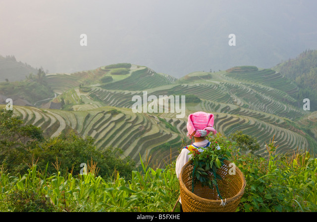 Zhuang girl carrying basket with rice terraces Longsheng Guangxi China - Stock Image