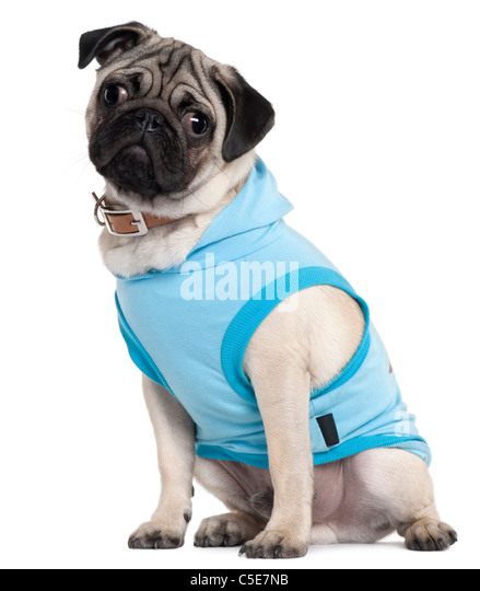 Amazoncom Clothes With Pugs On Them Clothing