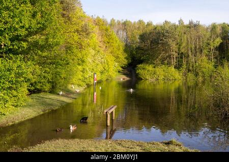 The pond in James Steel park, Washington, Tyne and Wear, England, UK - Stock Image