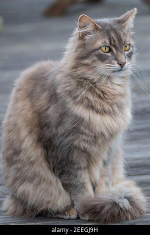 Beautiful cat sitting on the ground - Stock Image