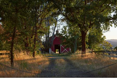 A private dirt road lined by trees and fence leads to a classic American red barn on Old Redwood Highway near Windsor, California. Sunny spring day. - Stock Image
