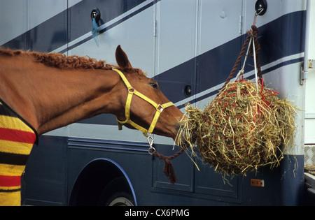 Belton Horse Trials, Belton House grounds, Grantham, Lincolnshire, UK - Stock Image