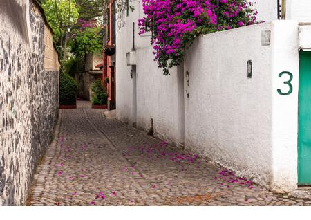 A scene from a quiet side street in Mexico City's Colonia Chimalistac. - Stock Image