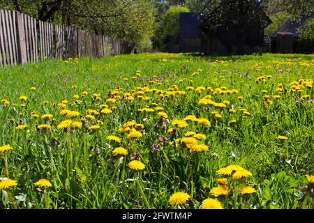 Polish countryside during spring - Stock Image