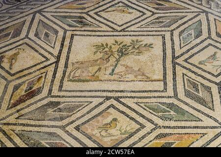 Aquileia, Italy - A well preserved mosaic decoration with hunting scenes on the floor of the ancient roman Domus of Tito Macro (1st century b.C.) - Stock Image