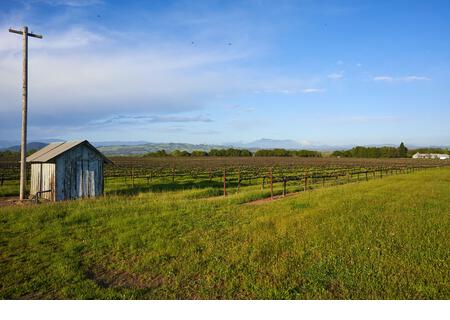 An electric pole and a wooden shed by vineyards with lots of green spring grass on a sunny day in rural Healdsburg, Sonoma County, California. - Stock Image