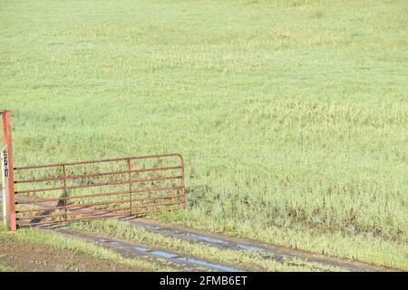 Red farm gate near a grassy field - Stock Image