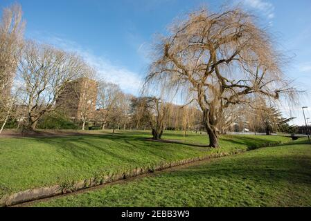 Basingstoke AA building in background of eastrop park spring time - Stock Image