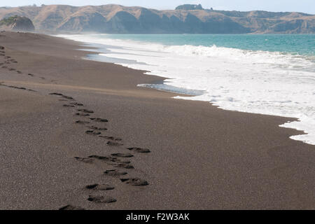 Black volcanic sand beach and Pacific Ocean in Whirinaki Hawkes Bay North Island - Stock Image