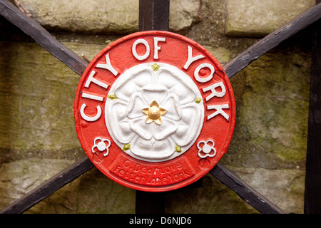 The white rose symbol of the house of York, the city of York, and Yorkshire, UK - Stock Image