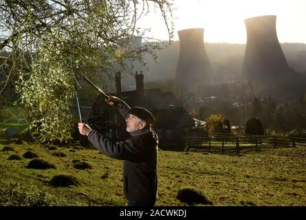 Buildwas, Shropshire, Uk 3rd December 2019. Harvesting mistletoe for Christmas at Buildwas in the Severn Gorge, Shropshire, England, Uk. Most of the English mistletoe is harvested in the neighbouring counties of Worcestershire, Herefordshire and Shropshire and Tenbury Wells is the capital of England for Mistletoe. Credit: David Bagnall/Alamy Live News - Stock Image