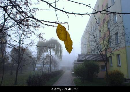Yellow autumn leaf on a tree - Stock Image