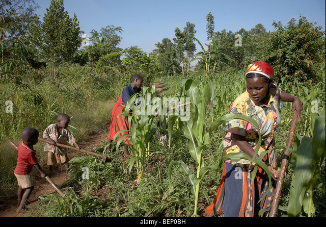 contribution of woman development in africa Overall status of women in africa although women play an important role in african the quality of life in society and for national development.