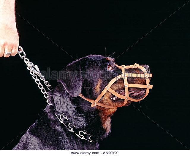 Ответственность за выгул собак без намордника Диаспаре