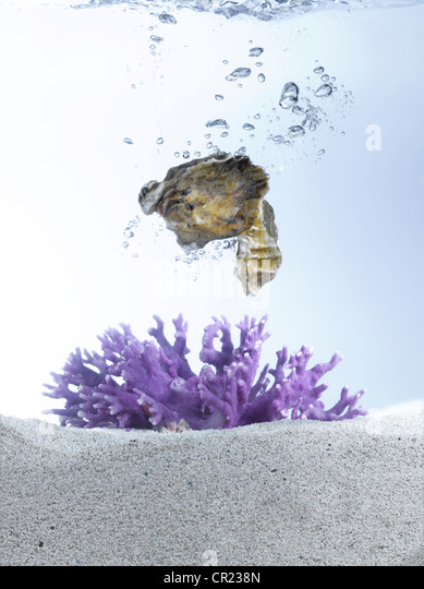 Live oysters in water