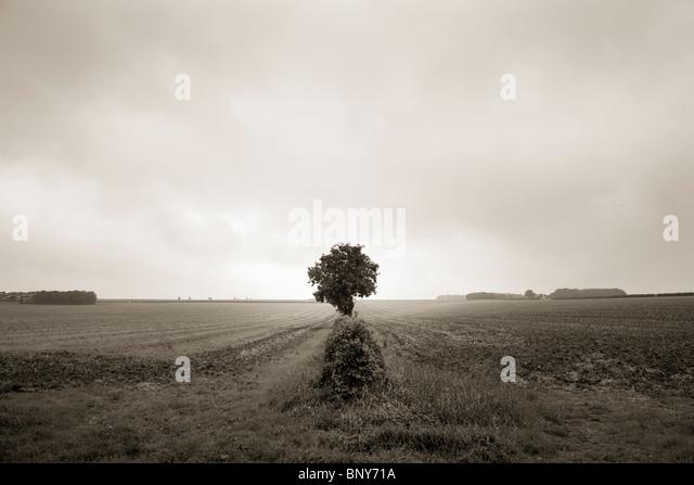 Lone tree in open field - Stock Image