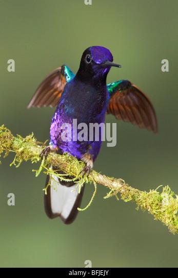 Ecuador Birding Tours  San Jorge Ecolodge amp Botanical