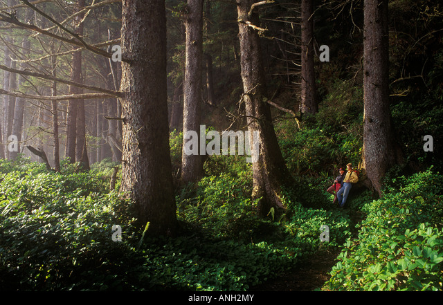 hikers-in-old-growth-forest-west-coast-t