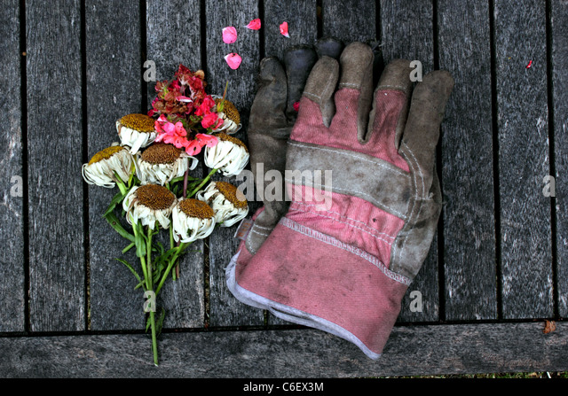 overhead-view-of-gardening-gloves-secate