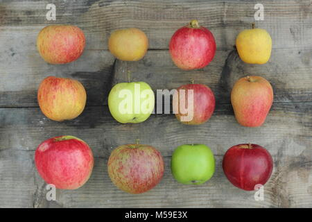 Malus domestica, British apples on wooden crate including Worcester Pearmain, Egremont Russet, Newton Wonder, Pitmaston - Stock Image