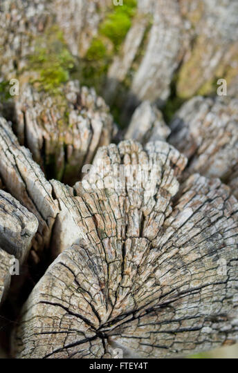 wood-texture-ftey4t.jpg