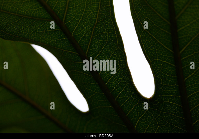 beautiful leaf in a contemporary style fine art photography Jane Ann Butler Photography JABP535 - Stock Image