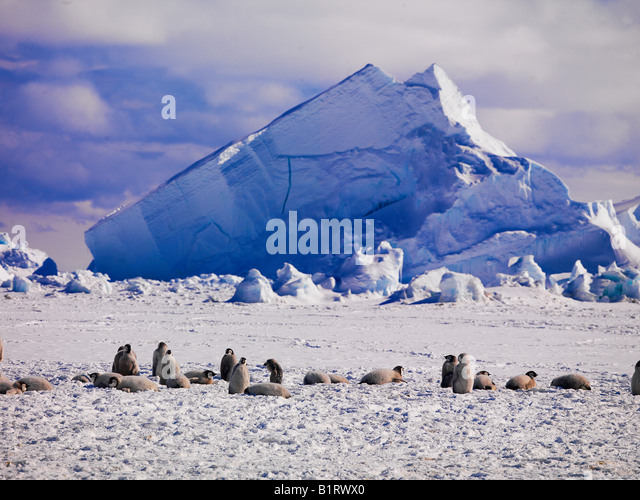 Antarctic landscape with penguins