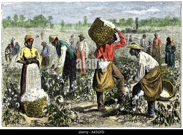 a study of the slave culture in america